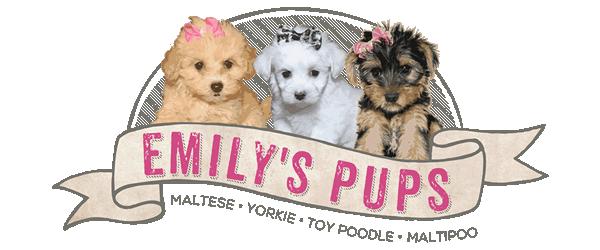 Emily's Pups